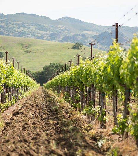 Oakville Vineyards - Image