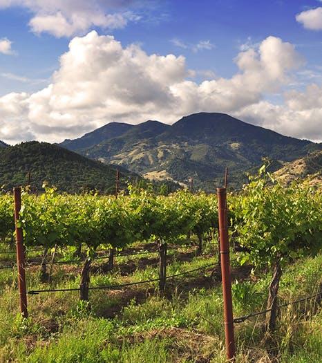Diamond Mountain Vineyards