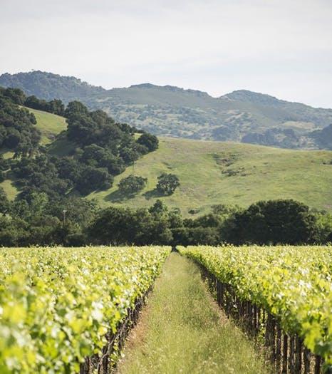Mountain Series - Vineyard Image